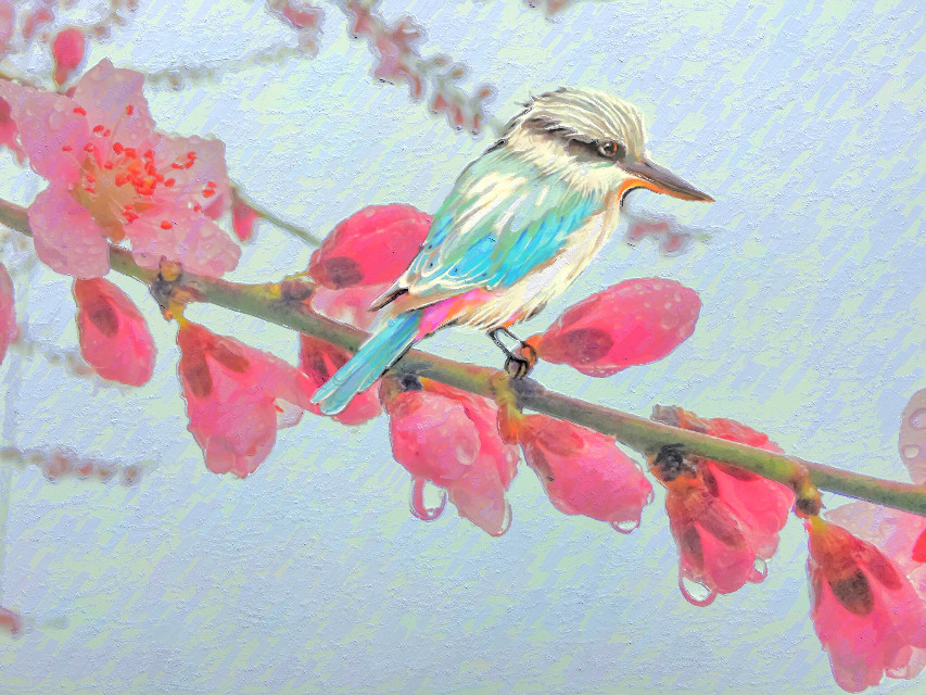 #candyminimal #cherryblossom #cherryblossoms #flowers #spring