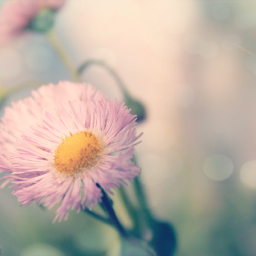 softcolors bokeh featured freetoedit