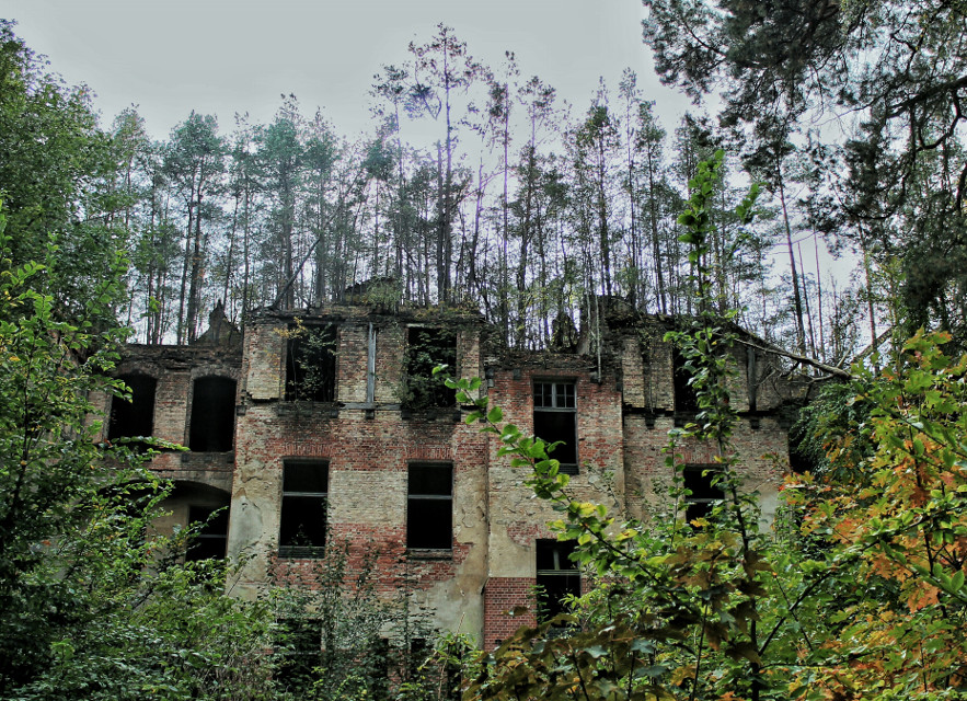 House of trees..  #creepy #lostplaces #trees #barack #nature #green  #history #old