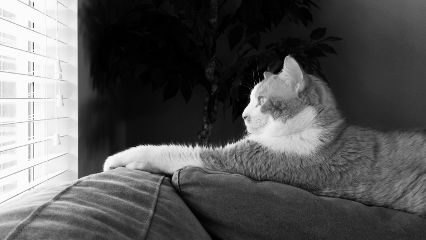 blackandwhite petsandanimals photography