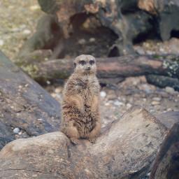 zoobasel freetoedit zoo animal photography