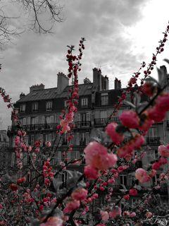 spring flower pink colorsplash architecture