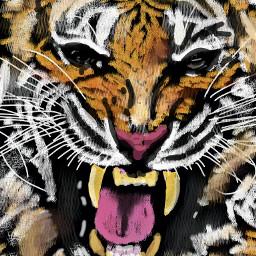 wdpzooanimals mydrawing tiger roar wild dcmyspiritanimal dcwildlife dcatthezoo dcwildanimals dcjungles