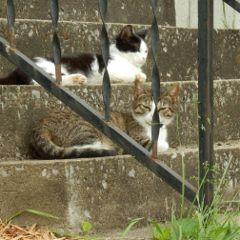 storytime spyingcats puppyshoot petsandanimals cats