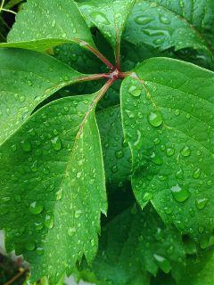 nature photography rain
