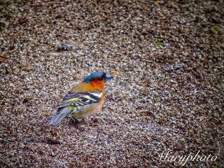 bird animal cute nature photography