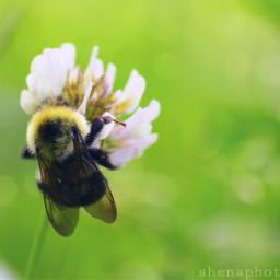 bee nature grass weeds petsandanimals freetoedit