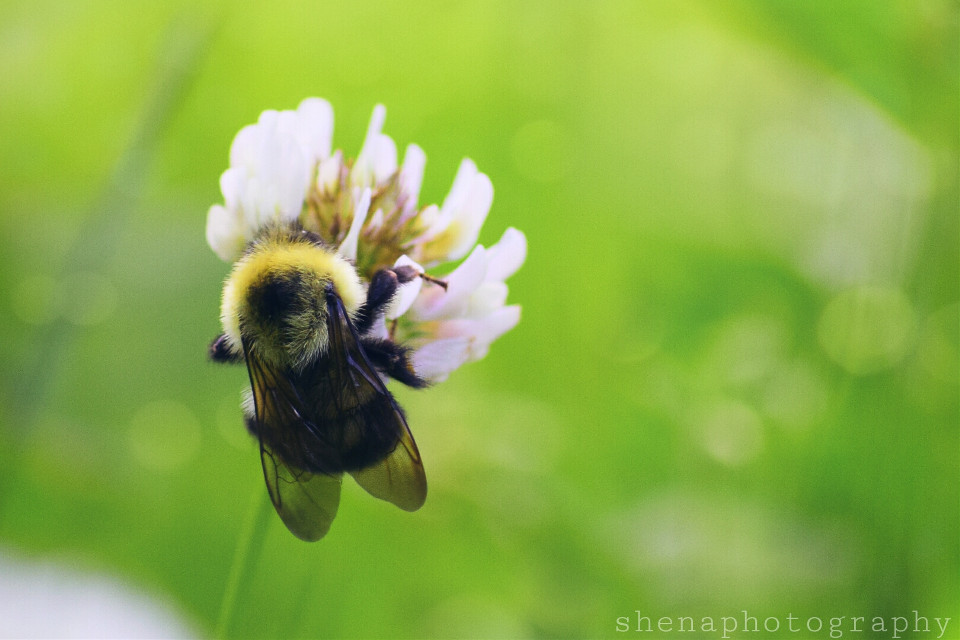 """""""How many cares one loses when one decides not to be something but to be someone."""" Coco Chanel  #bee #nature #grass #weeds #petsandanimals #wings #green #quotesandsayings #bokeh #freetoedit"""